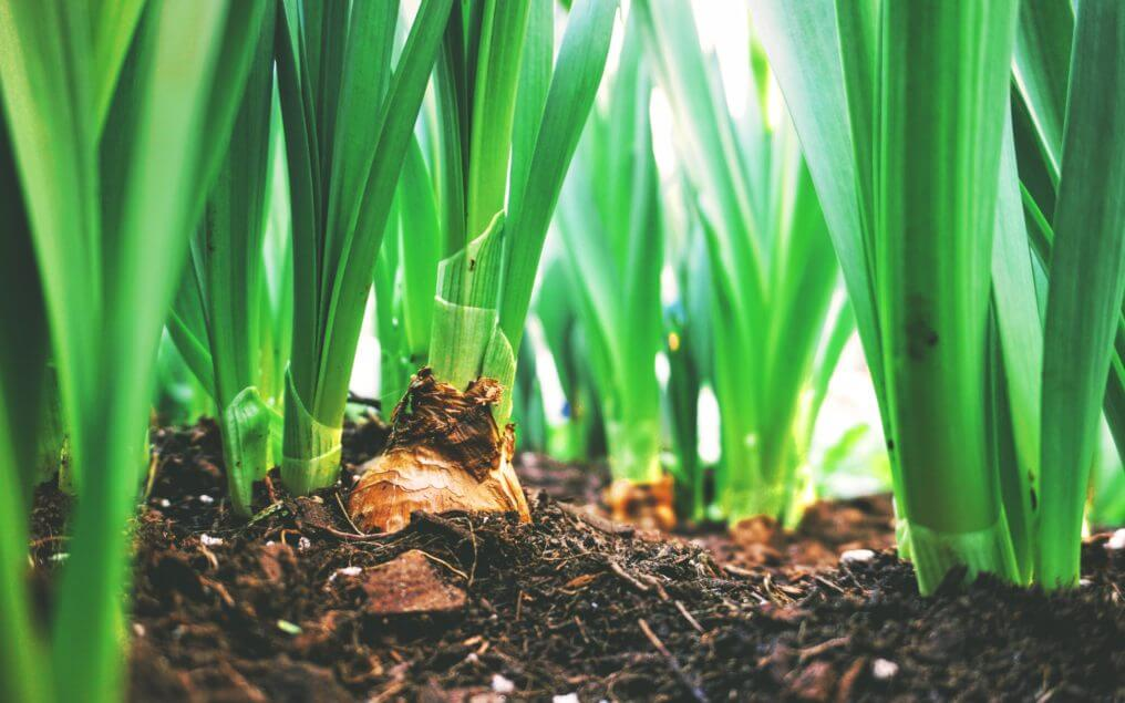 long life windows and doors gardening tips